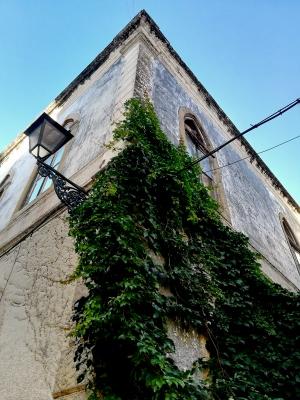 /s/t com vegetação e edifício