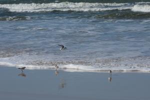 /Andorinhas do mar