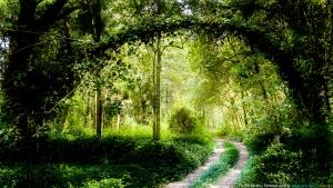 /A entrada da floresta