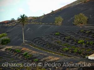 Gentes e Locais/Nas cinzas do vulcão