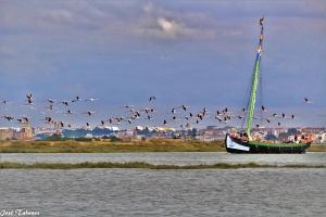 Paisagem Natural/O barco e os flamingos