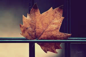 Macro/outono