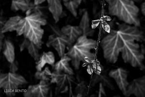 Paisagem Natural/folhas verdes a p&b