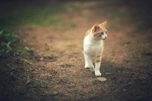 Animais/gato