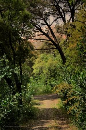 Paisagem Natural/Caminho entre Verdes
