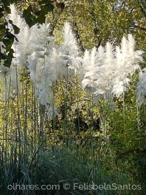 Paisagem Natural/As plumas !
