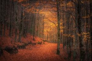 /Um Poema de Outono