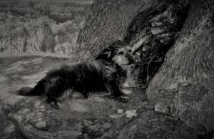 /A eterna história do cãozinho (II) (desc.)
