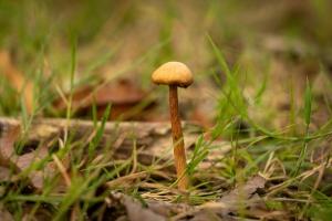 /Mushroom