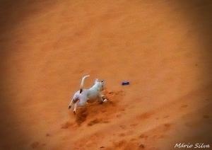 Retratos/O cão foi à praia