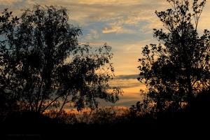 Paisagem Natural/Árvores ao Pôr do Sol