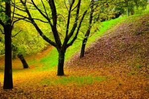 /Fall..