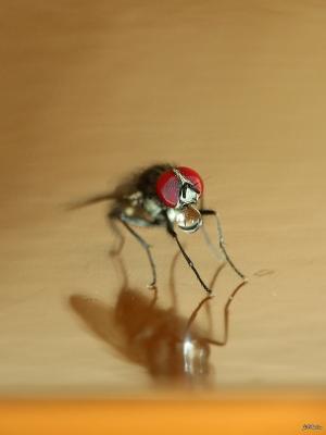 /Olha a mosca...