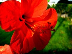 Outros/Flor