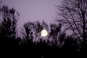 Paisagem Natural/lua cheia