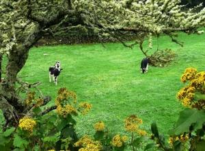 Paisagem Natural/Verde... vacas... Açores sem duvida...