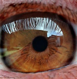 Outros/Reflexos de um olhar