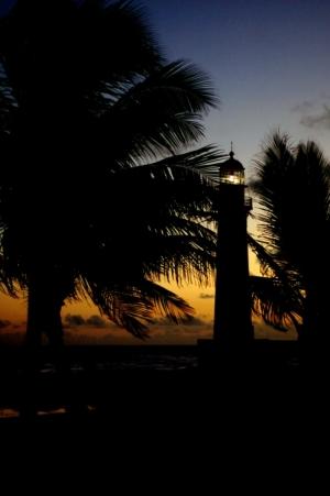 Paisagem Natural/Entre as palmeiras