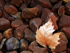 /As folhas caem...