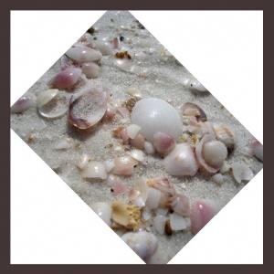 Outros/As conchinhas do mar