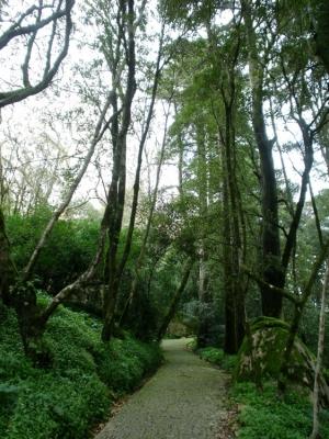 Paisagem Natural/Caminhos da Natureza