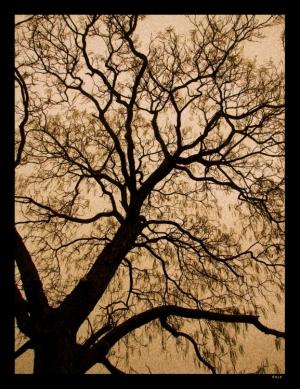 Abstrato/ramos despidos....