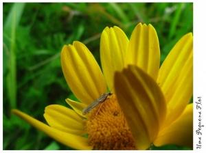 Outros/Uma flor