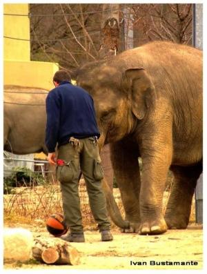 Animais/Elefante batendo uma bolinha