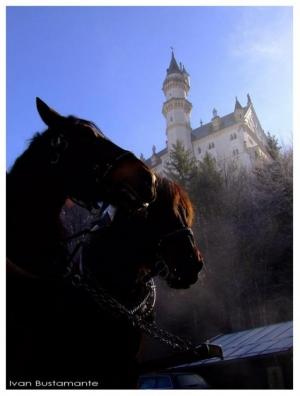 Animais/Cavalos e o Castelo
