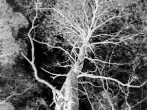 Abstrato/preto e branco