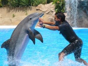 /golfinho
