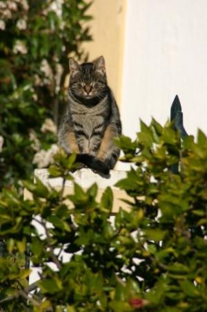 /Sob o sol do Algarve....