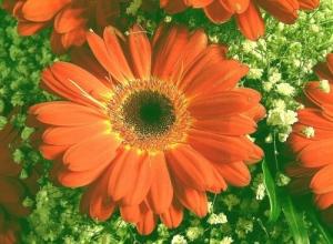 /flores..