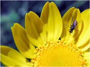 /A flor e o mosquito