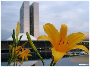 /Capital do Brasil...