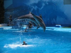 /Golfinhos em Acção
