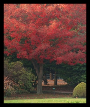 /Cores de Outono...