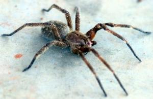 /Spider...