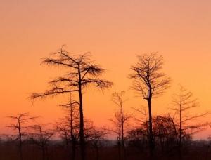 /Nascer do sol no Everglades