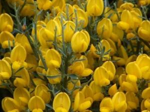 Paisagem Natural/Flores da Serra