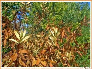 Paisagem Natural/Color