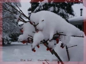 /Ursinhos de neve