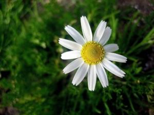 /Flor