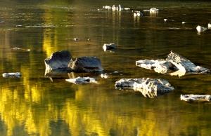 Paisagem Natural/Rio Mondego com crocodilos?
