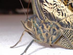 /Punk Butterfly