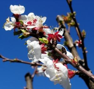 Macro/A Primavera .....