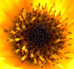 Macro/Na Primavera o Sol brilha......