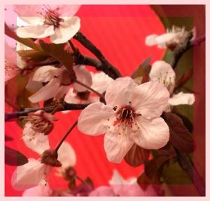 Macro/suaves rosas