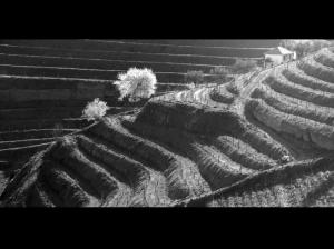 Paisagem Natural/linhas cruzadas II