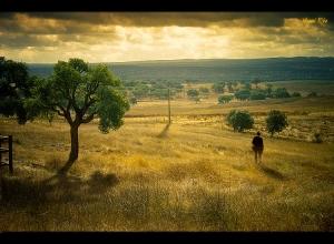 Paisagem Natural/A Viagem